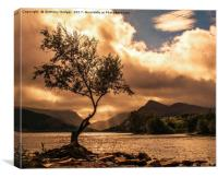The Lone Tree at Llyn Padarn, Canvas Print