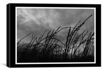 Summer Meadow, Canvas Print