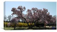 Magnolia Blossom, Canvas Print