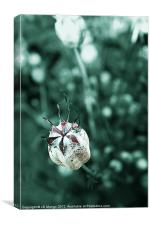 Seed Head, Canvas Print