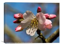 Pretty Pink Blossom floral canvas, Canvas Print