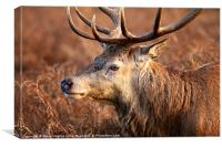 Bushy Royal Park Deer Stag, Canvas Print