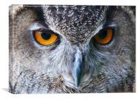 Eagle Owl Eyes, Canvas Print