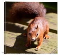 British Red Squirrel, Canvas Print