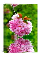 Pink Blossom and water, Canvas Print