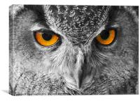 European Eagle Owl Bright eyes, Canvas Print