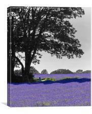 Purple Mayfield Lavender, Canvas Print