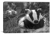Black & white Badger Mustelidae, Canvas Print