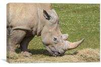 White Rhinoceros , Canvas Print