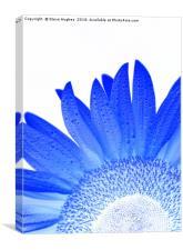 Blue sunflower, Canvas Print
