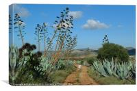 A walk through the agave, Canvas Print