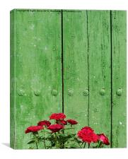 Red roses green door, Canvas Print