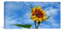 Sunflower in Winter, Canvas Print