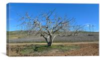 Fig tree in winter, Canvas Print