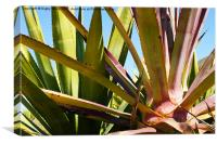 Agave again, Canvas Print