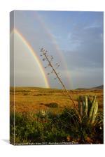 Agave with Rainbow, Canvas Print
