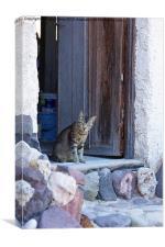 Cat in doorway, Canvas Print