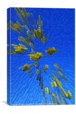 Agave with summer sky, Canvas Print