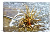 Agave on the beach, Canvas Print