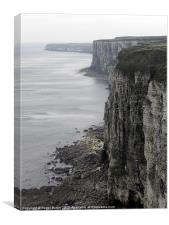 Early Spring at Bempton Cliffs, Canvas Print