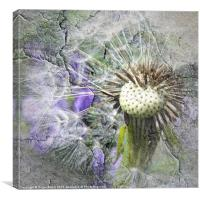 The Dandelion Cracked, Canvas Print
