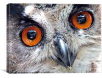 Eagle Owl Closeup, Canvas Print
