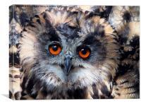 European Eagle Owl, Canvas Print