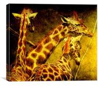 Giraffes galore, Canvas Print
