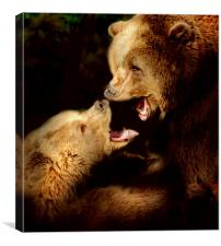 Bear talk, Canvas Print