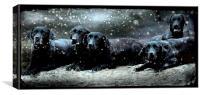 Labby Christmas, Canvas Print