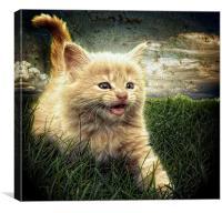 Kitten in the grass, Canvas Print