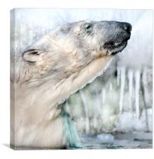 Winter swimming, Canvas Print