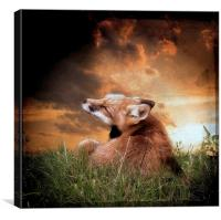 Early morning scratch, Canvas Print