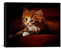 Sittin' kitten, Canvas Print