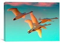 Flying into the sunset, Canvas Print