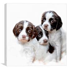 Three of a kind, Canvas Print