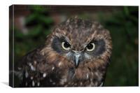 Long Ear Owl, Canvas Print