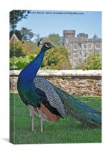 Peacock castle, Canvas Print