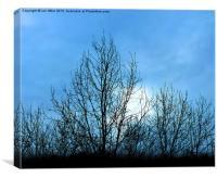 dark trees, Canvas Print