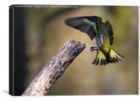 Headless bird nearly on a stick..., Canvas Print