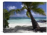 Palm Tree, Canvas Print