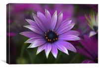 Purple, Canvas Print