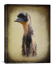 Emu, Canvas Print