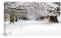 Snow Covered Trees, Canvas Print
