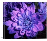 The big purple, Canvas Print