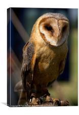 Dusk Dark Beasted Barn Owl, Canvas Print