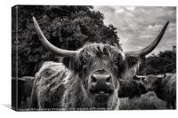 Highland Hairy Beastie, Canvas Print