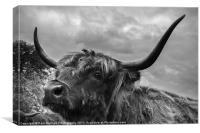 Highland Beastie 2, Canvas Print