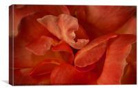 Rose Petals, Canvas Print