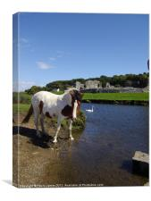 Ogmore River and Castle, Horse and Swan, Canvas Print